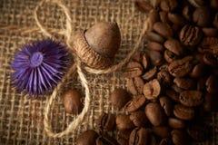 Torkade ekollon- och kaffebönor på en jute hänger löst bakgrund, kopieringsspac royaltyfria bilder