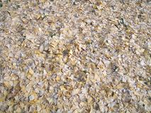 torkade fallna leaves Arkivfoton