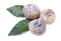 torkade figs Royaltyfri Fotografi