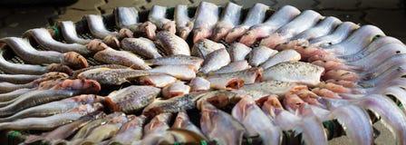 Torkade fishs av lokal mat på öppna marknaden Royaltyfri Fotografi