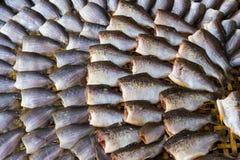Torkade fishs av lokal mat på öppna marknaden Arkivbild