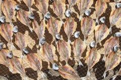 torkade fiskar Fotografering för Bildbyråer