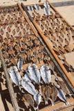 Torkade fiskar Royaltyfri Fotografi