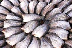 Torkade fiskar för mål Royaltyfri Fotografi