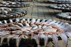 Torkade fiskar på den Thailand markören Royaltyfri Bild