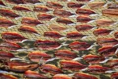 Torkade fiskar vid värme från direkt solljus Royaltyfria Foton