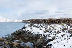 Torkade fiskhuvud Fotografering för Bildbyråer