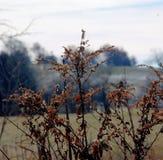 Torkade gräs på tidig vinterdag framme av fältet som täckas lätt med snö Royaltyfri Foto