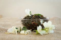 Torkade grönt te och jasminblommor Arkivfoto