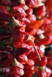 Torkade hängande peppar för röd chili royaltyfri fotografi