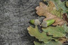 Torkade höstsidor och ekollonar på träbakgrund Royaltyfri Foto