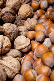 Torkade hasselnötter och valnötter Royaltyfria Foton