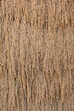 Torkade lagade mat riskorn torkade bakgrund Arkivbild
