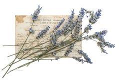 Torkade lavendelblommor och gammal vykort Arkivbilder