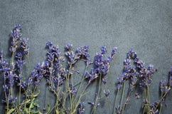 Torkade lavendelblommor och rosa kronblad fotografering för bildbyråer