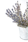 Torkade lavendelkvistar Royaltyfria Bilder