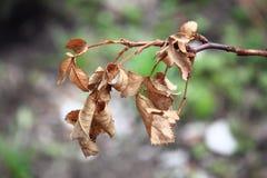 torkade leaves Royaltyfri Foto