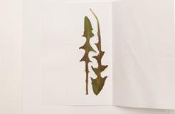 Torkade maskrossidor på ett ark av vitbok royaltyfria foton