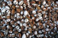 torkade musslor Arkivbilder