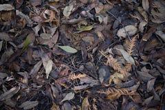 Torkade nedgångsidor på skogen grundar i höst Royaltyfri Foto