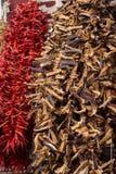 Torkade peppar och aubergine och färgglade kryddor Royaltyfria Bilder