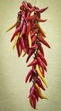 Torkade peppar på en tråd Fotografering för Bildbyråer