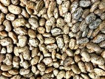 Torkade Pinto Beans, mest populär böna i Förenta staterna och nordvästliga Mexico, arkivfoto