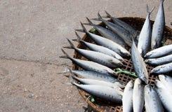 Torkade rimmade gula queenfish Arkivfoto
