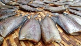Torkade rimmade Orm-hud fiskar Arkivbilder