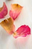 Torkade rosa kronblad Arkivbild