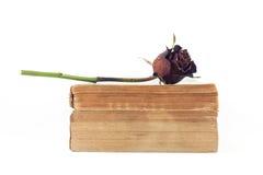 Torkade rosa och gamla böcker på vit bakgrund Arkivfoton