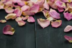 Torkade rosa Petals Arkivfoto