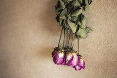 Torkade rosa rosor på väggen Arkivfoto