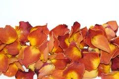 Torkade rose petals Royaltyfri Fotografi