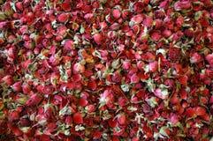 torkade rosebuds Arkivbild