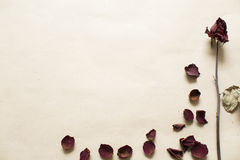 Torkade rosor på brun bakgrund Arkivfoto