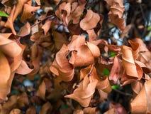 Torkade sidor på trädet 01 Royaltyfri Bild