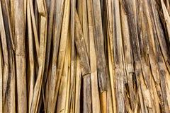 Torkade skal som används för indianhus arkivfoton