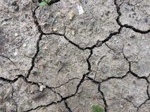 Torkade sprickor i jorden för jord` s har en bakgrundstextur Mosaisk modell av solig torr jord Groddar Royaltyfri Bild