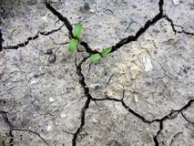 Torkade sprickor i jorden för jord` s har en bakgrundstextur Mosaisk modell av solig torr jord Groddar Arkivbild