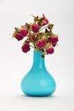 Torkade-upp röda rosor i en blå vas som isoleras på vit bakgrund Royaltyfri Foto