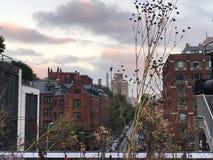 Torkade växter i vinter arkivbild