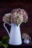 Torkade vanlig hortensiablommor Royaltyfria Foton