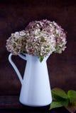 Torkade vanlig hortensiablommor Arkivbilder