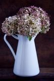 Torkade vanlig hortensiablommor Fotografering för Bildbyråer
