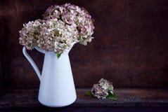 Torkade vanlig hortensiablommor Royaltyfri Bild