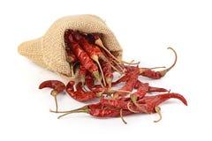 Torkade varma röda chili i en säck på vit backgroud Fotografering för Bildbyråer