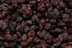 torkade vinbär Royaltyfri Fotografi