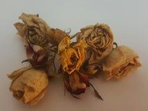 Torkade vita röda gula rosor i en bukett Royaltyfri Foto