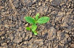 Torkaland karg jord sprucken bakgrund torkar jord sprucken mudmodell Royaltyfri Fotografi